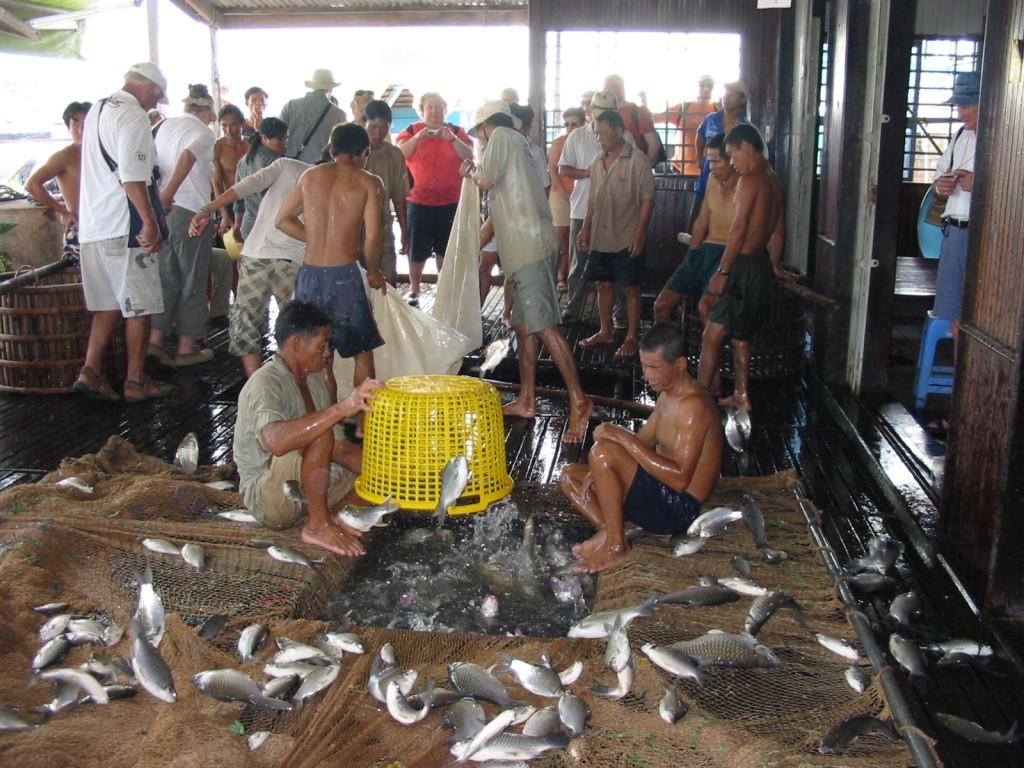 A visit to a floating fish farm • Photo: Heidi Sarna