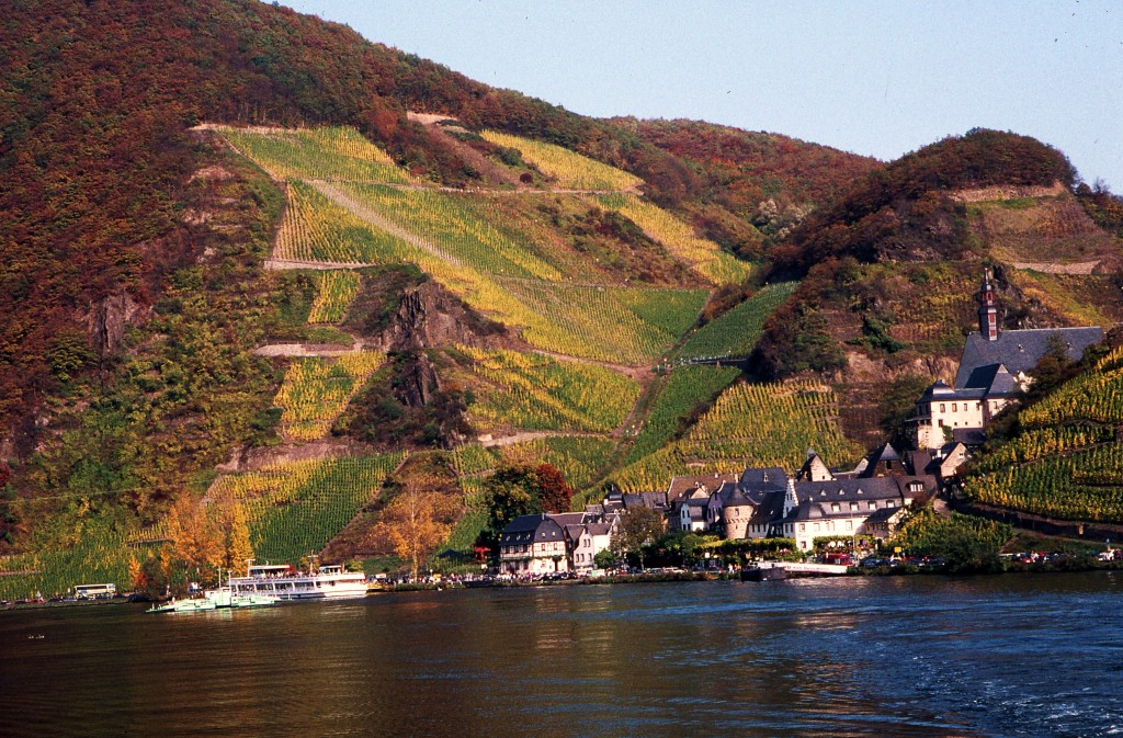 Autumn colors after the grape harvest along the Moselle in Germany. * Photo: Ted Scull