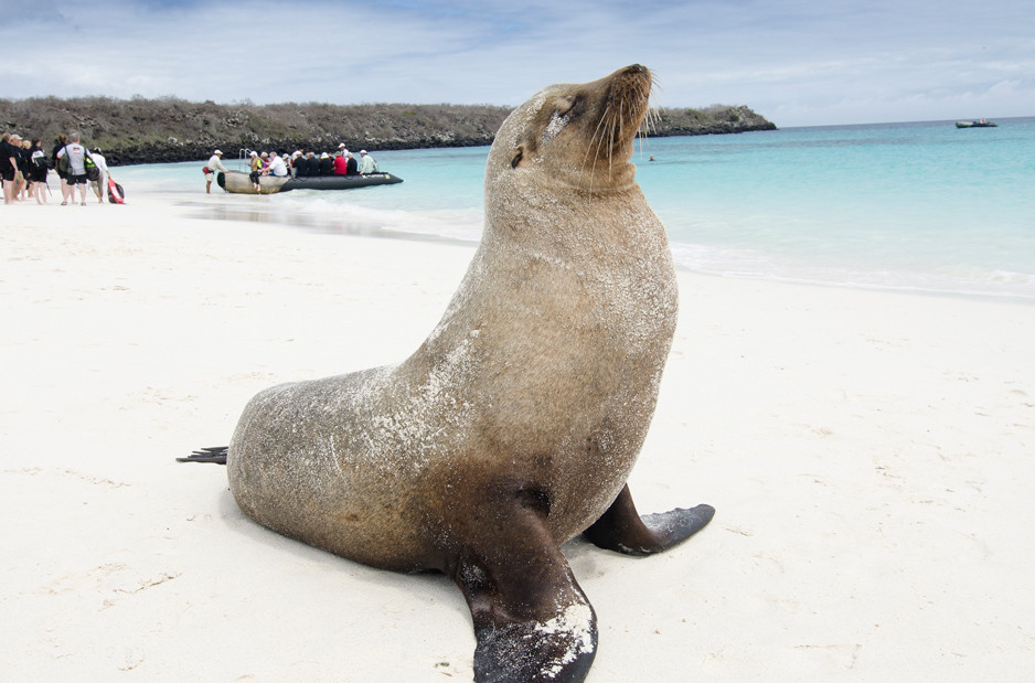 Seeing fur seals up close is business as usual. * Photo: Celebrity Cruises